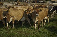 Study of 100 Billion Animals Finds GMOs Safe | IFLScience