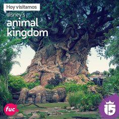 """Con el grupo #fucsiaD15 vamos a visitar Disney's Animal Kingdom donde se encuentra el """"Árbol de la vida"""" construido sobre una vieja extractora petrolífera para darle vida a todo #Disney!  La magia nace con #enjoy15!"""