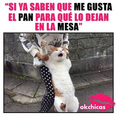 Mexican Funny Memes, Mexican Humor, Funny Spanish Memes, Spanish Humor, Funny Animal Jokes, Funny Cats, Funny Animals, Cute Animals, New Memes