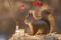 This is the Usual View from the Window of my Kitchen - Photographer Geert Weggen, http://itcolossal.com/photographer-geert-weggen/