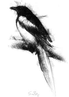 Magpie, Artist Sean Briggs producing a sketch a day, prints available at https://www.etsy.com/uk/shop/SketchyLife  ##artist ##Etsyshophttp://etsy.me/1rARc0J#magpie ##illustration#ink#print#draw©#Sean_Briggs #art #crow #drawing #sketch