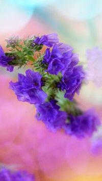 Fioletowe polne kwiatki