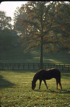 1978 Ron Turcotte Secretariat Claiborne Farm Horse Racing 8x10 Photo Triplecrown | eBay I WANT