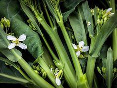 Chinese Kale, Yod Fah
