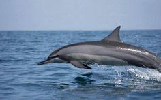 Dolphin watching trip in Kalpitiya #dolphin watching #whale watching #kalpitiya  # Sri Lanka   Book your holiday dolphin watching trip info@welcometokalpitiya.com