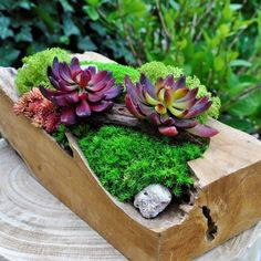 Hashtags, Succulents, Explore, Photo And Video, Plants, Instagram, Succulent Plants, Plant, Planets