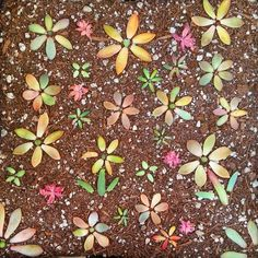Lots of fun ways to arrange succulent leaves while they grow babies! Leaf & Clay