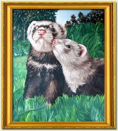 Image detail for -Web Ferrets Pet Drawings, Animal Drawings, Cute Ferrets, Toot, Pet Store, Better Homes, Sharks, Cousins, Photo Art