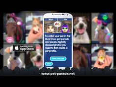 Introducing Pet Parade App launching on Dec Pet Dogs, Dog Cat, Pets, Cat Owner Humor, Pet Parade, Dog Care Tips, Cat Health, Funny Cat Pictures, Animals Images