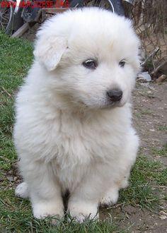 Risultato della ricerca immagini di Google per http://www.abruzzese.org/foto/cucciolo.JPG