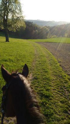 As Seen Through Horses Ears - Austria Cute Horses, Beautiful Horses, Horse Ears, Horse Pictures, Horse Photography, Wild Horses, Show Horses, Horseback Riding, Horse Riding