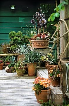 Container garden - so this is the green I want for garage door and base of the house