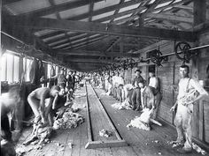Shearing board, Burrawang station. Burrawang began in 1836 as a squatters' run and by 1866 it covered more than 2000sq.km between Forbes and Condobolin in central-western New South Wales.