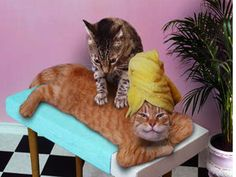 Can I bring the Kittehs to my Dream Spa Retreat? :-) #spaweek