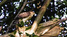 Perching and Searching by Ola Allen