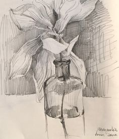 Magnolia. 3.4.16. #Sketchbook by Sarah Sedwick. #art #drawing #sketch