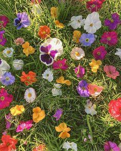 Flowers Nature, My Flower, Wild Flowers, Beautiful Flowers, Fresh Flowers, Spring Aesthetic, Nature Aesthetic, Flower Aesthetic, Mother Earth