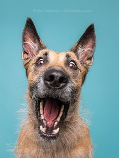 Expressive Dog Portraits by Elke Vogelsang Animals And Pets, Funny Animals, Cute Animals, Funny Animal Pictures, Dog Pictures, I Love Dogs, Cute Dogs, Dog Expressions, Crazy Dog