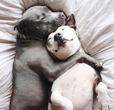This is sooo like them!!! Such cuddle buddies!!! ❤️