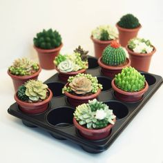 cupcakes that look like succulents! Gorgeous Cakes, Pretty Cakes, Cute Cakes, Amazing Cakes, Creative Desserts, Creative Cakes, Mini Cupcakes, Cupcake Cakes, Flower Pot Cake