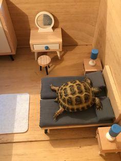 Horsefield Tortoise, Hermann Tortoise, Red Footed Tortoise, Tortoise House, Tortoise Habitat, Turtle Habitat, Tortoise Table, Sulcata Tortoise, Giant Tortoise