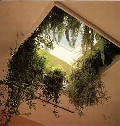 Plants in the skylight Eco decoration Interiors Garden indoors ++ Plantas verdes… Patio Interior, Interior Exterior, Interior Design, Bathroom Interior, Hanging Plants, Indoor Plants, Hanging Gardens, Window Hanging, Indoor Outdoor