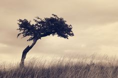 wallpapers free tree
