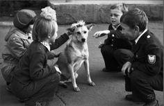 Фотографии, закоторые авторов уволили сработы: «Венок для собаки». Дети пришли в школу и увидели собаку, которую решили одарить цветами.