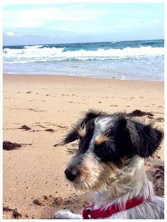 Luna enjoy the beach view