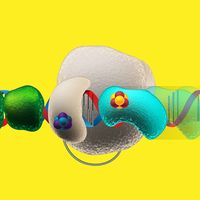 Electrons Use DNA Like a Wire for Signaling DNA Replication