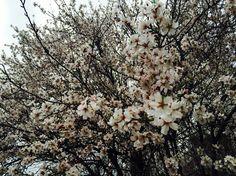 გაზაფხულის საღამოა მშვიდი... Snow, Plants, Outdoor, Outdoors, Plant, Outdoor Games, Human Eye, Planting, Planets