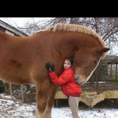 I love the gentleness of love that you see from this gentle giant, loving workhorse.  #Wicklessmolly