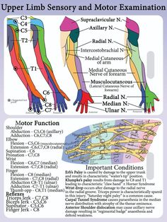 We create and provide high quality PVC plastic lanyard cards designed to be aide memoires for medical professionals. All cards are printed on superior quality PVC cards with quality EPSON pigment ink. Nerve Anatomy, Human Body Anatomy, Human Anatomy And Physiology, Muscle Anatomy, Physical Therapy Student, Occupational Therapy, Radiculopathy, Spine Health, Medical Anatomy