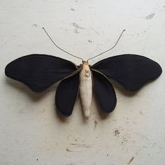 Soft sculpture of a moth made from Blackout curtain from theatre.