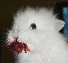 """So my friend gave her rabbit a cherry . . .."""