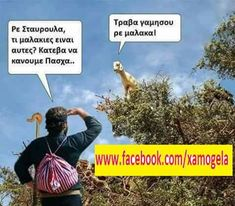 Greek Language, Biologist, Greek Quotes, Hilarious, Funny, Out Loud, Laughter, Jokes, Lol