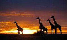 ✈ Kenya Safari with Airfare from Indus Travels. Price per Person Based on Double Occupancy (Buy 1 Groupon/Person). Diani Beach, African Sunset, Ayers Rock, Balloon Rides, Best Sunset, Out Of Africa, Game Reserve, Beach Holiday, Life Is An Adventure