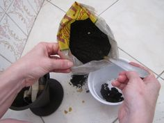 Como Usar Borra de Café nas Plantas | Flores - Cultura Mix
