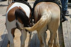 photos of two horses asses | Recent Photos The Commons Getty Collection Galleries World Map App ...
