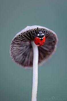 Ladybug exploring a mushroom! :)