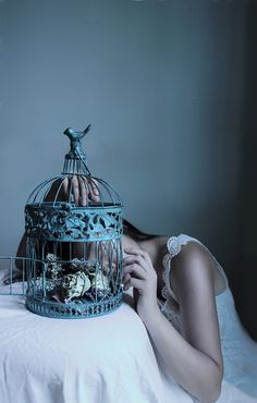 Bird cage #photography