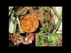 Medicinal Rice P5N Formulations for Verbena Excess: Pankaj Oudhia's Medi...
