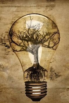 Life within the light bulb.