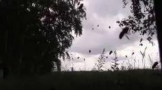 Поведение пчел перед дождем
