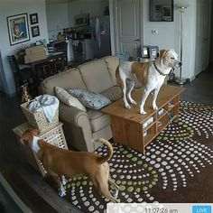 17 Weird Things Dogs Do When You're Not Home — Caught On Pet Cam!