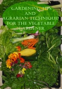 how to grow in a above ground garden