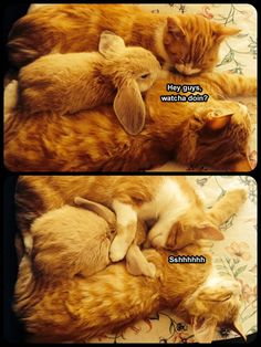 Kitties and a bunny?! Cute overload!