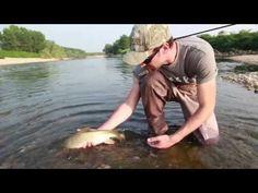 Catch the barbel #flyfishing #fishing #movi-media #italy #barbel #funny