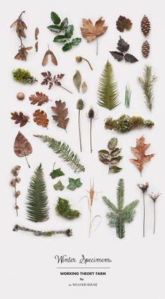 Photography still life design, winter nature finds Botanical Art, Botanical Illustration, Belle Image Nature, Decoration Plante, Planting Flowers, Graphic Design, Web Design, Life Design, House Design