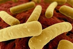Bactérias são mais precisas que relógios | Portal Elvasnews